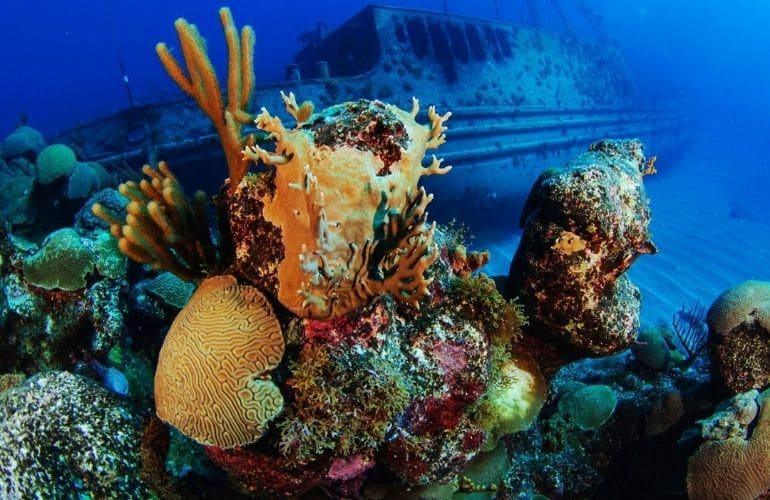 Yolanda Reef